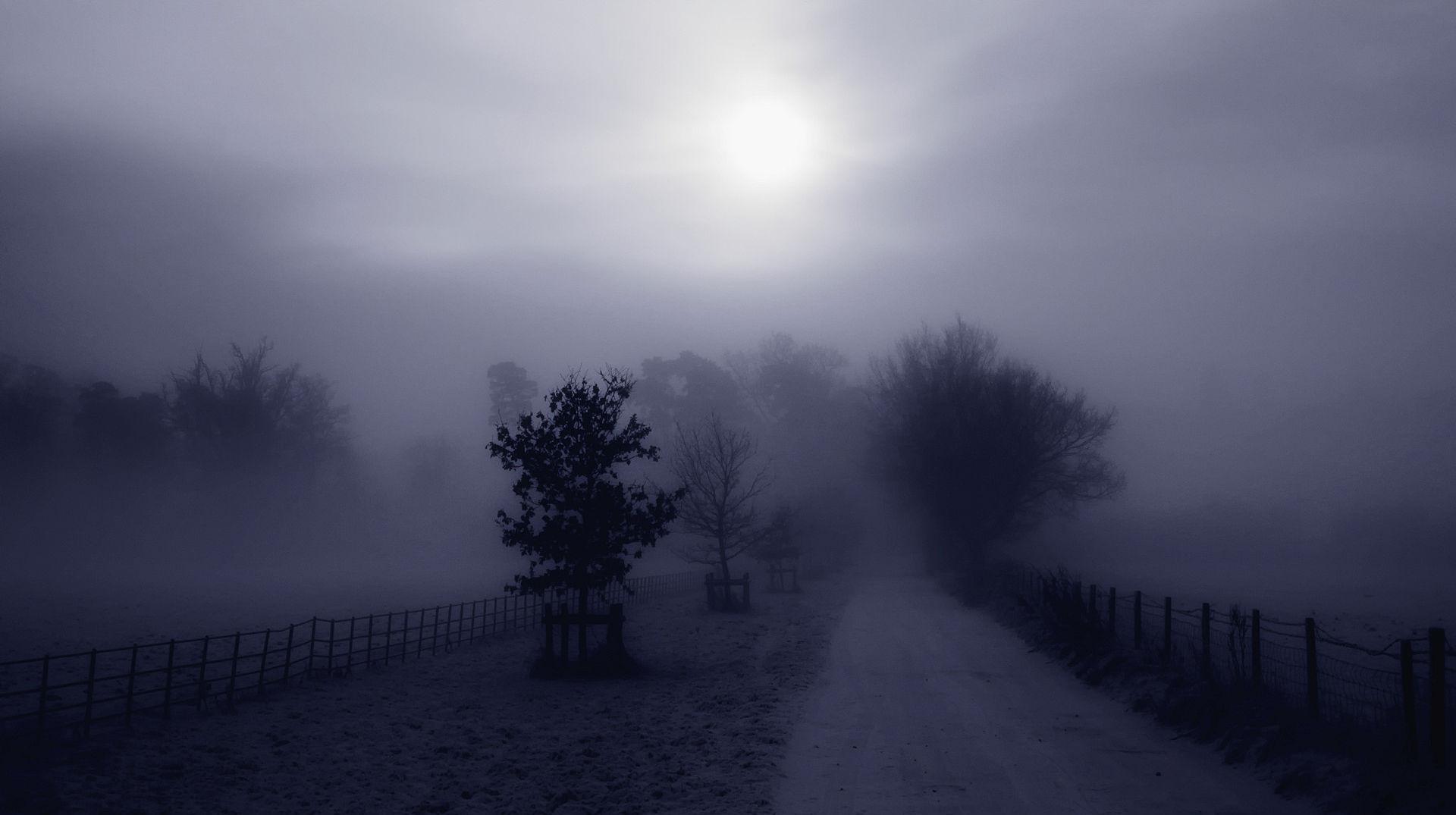 Fitta Nebbia Sul Campo. Guarda I Più Bei Sfondi Naturali