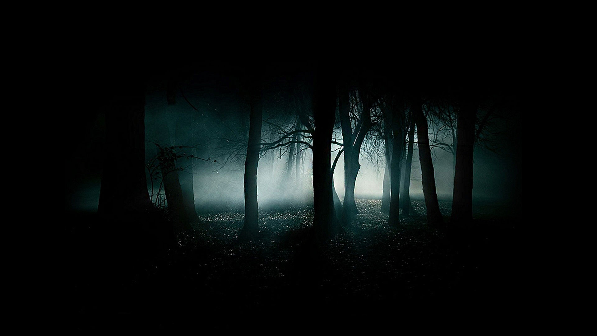 Undercover vue de la nuit impr visibles f roces animaux for Fond ecran sombre